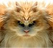 Аватар пользователя Бергам